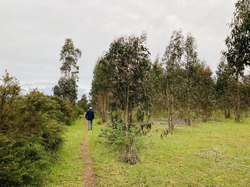 Predio sitio terreno en venta Hijuela El Porvenir sector Coreo Quilleco Camino a Santa Bárbara Los Ángeles