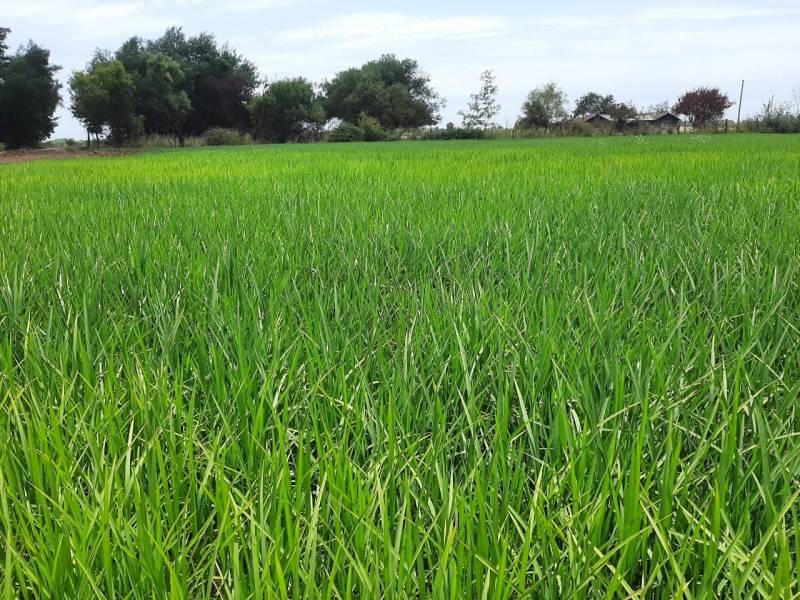 Predio campos parcelas terrenos sitios en venta en Chihuahua Parral de 95 ha