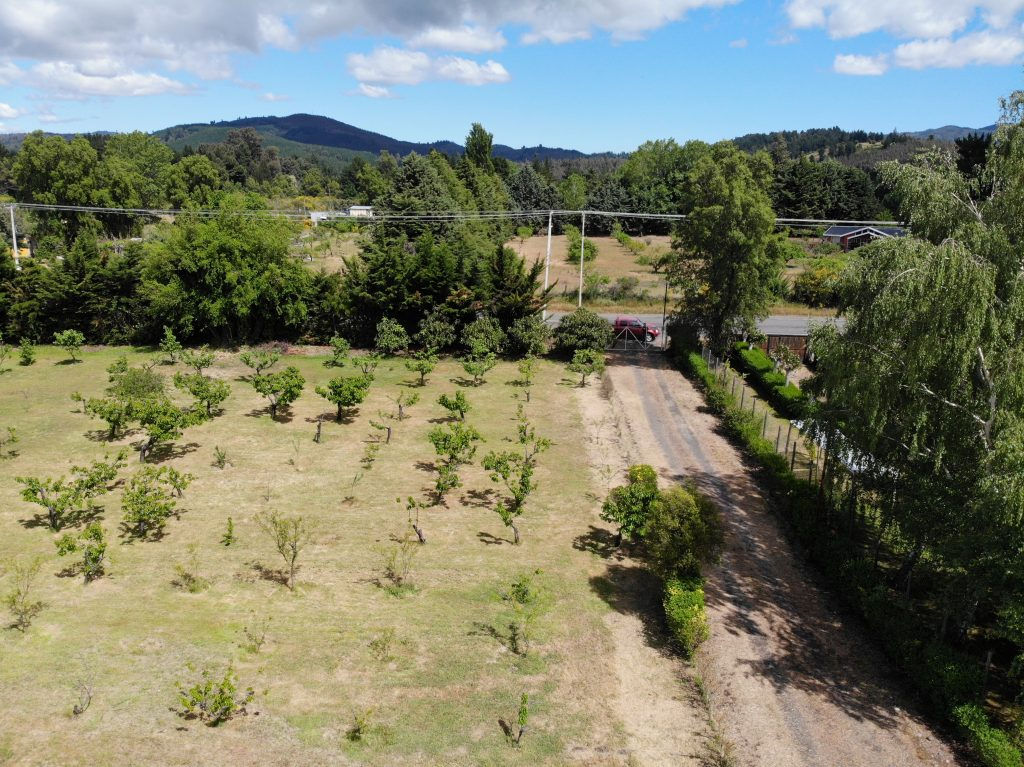 Parcela barata Camino a Cerro Negro Quillón arboles frutales